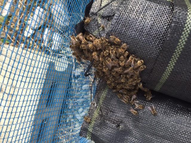 蜂・蜂・蜂